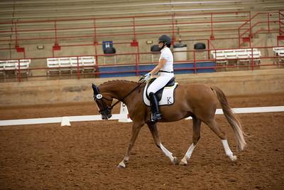 Horse 468