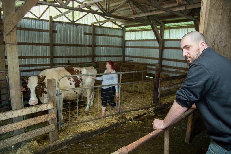 Bennett-Farm-buttercup-007.jpg
