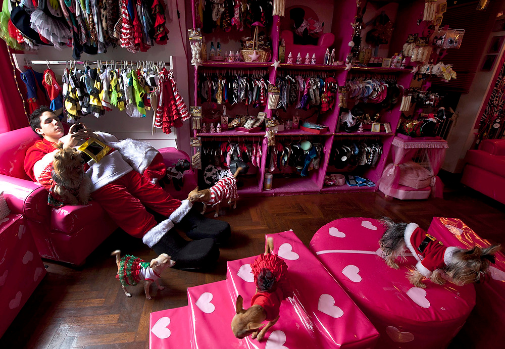 Description of . A man dressed in a Santa Claus costume chats on his cell phone as he works at a dog boutique where customers' dogs wearing Christmas costumes walk around in Lima, Peru, on Saturday, Dec. 22, 2012. The pet boutique hired him for the Christmas holidays. (AP Photo/Martin Mejia)