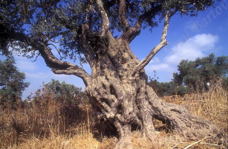 Yehuda 11.jpg