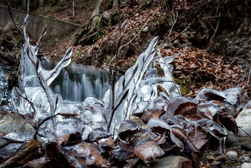 tiefgefroren | deep-frozen