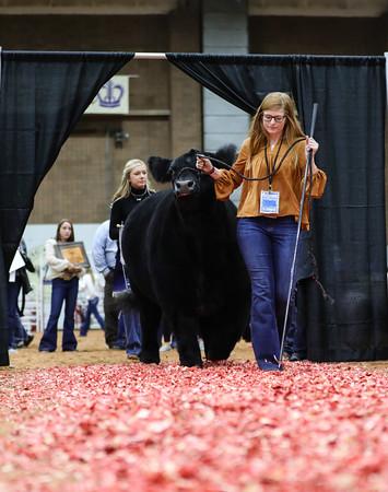 Junior Premium Livestock Auction