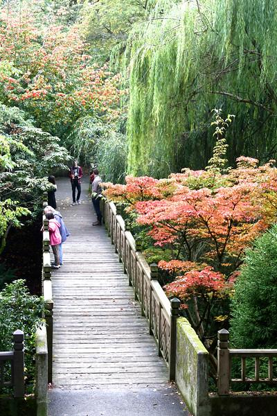 Crystal Springs Rhododendron Garden Nov 1 2014