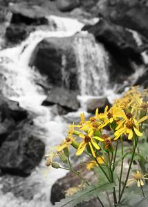 2006-08 Timberline Falls