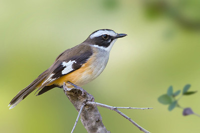 NW Queensland, May 2012