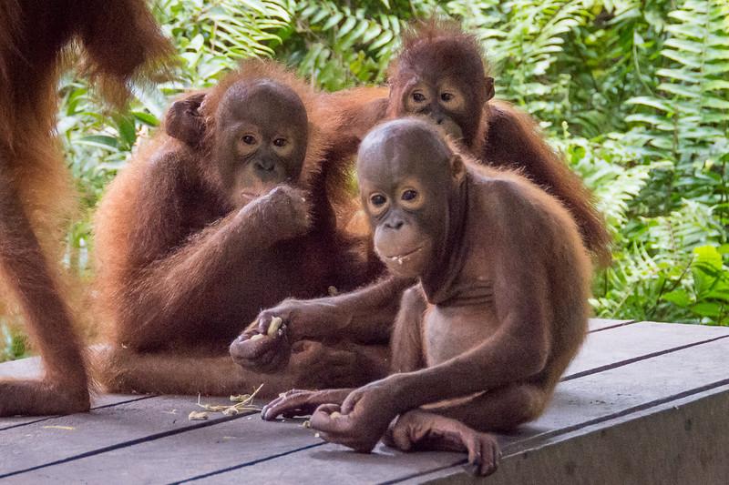 Borneo-2245.jpg
