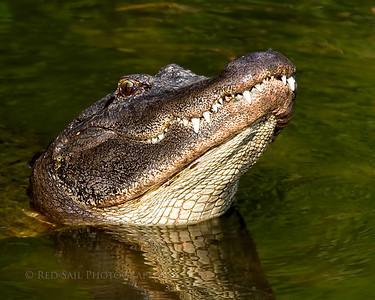 South Florida Photo Tour