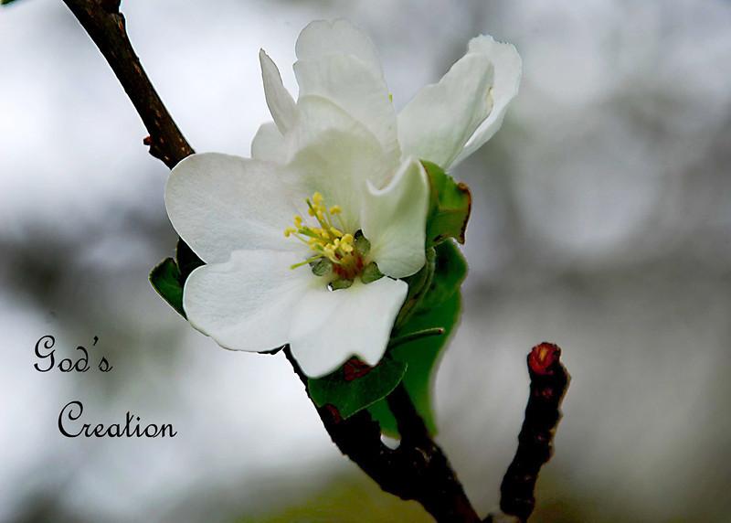 White Blossom .jpg