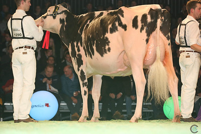 Swiss Expo Holstein Int Cows17