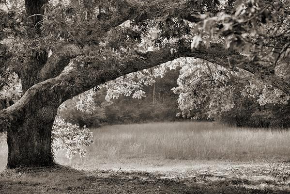 Black & White Explorations