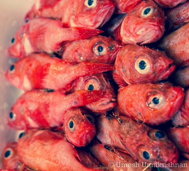 Tsukiji Fish Market 016.jpg