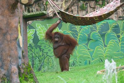 2019-02-10 JTV Surabaya Zoo Shoot