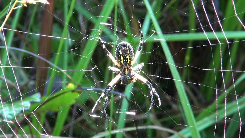 spider_03.mov