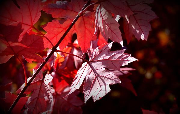 Fall Color - Illinios and Indiana