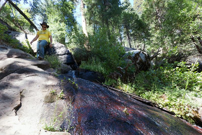 Sequoia_0312.jpg