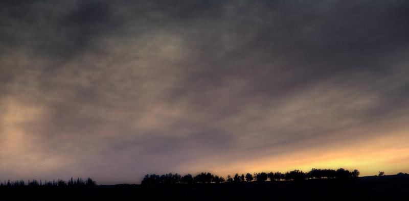 Silhouette Trees.jpg