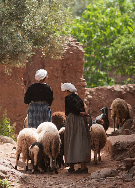 Minding Goats in High Atlas