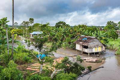 Wooden shack with thatch roof along Amazon river