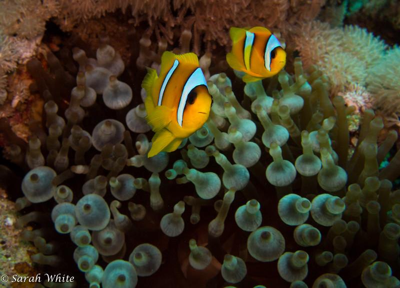 141108_Sharm2014_060.jpg