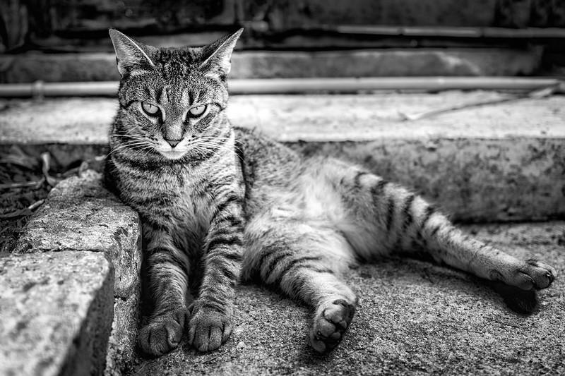 sixtoedcat.jpg