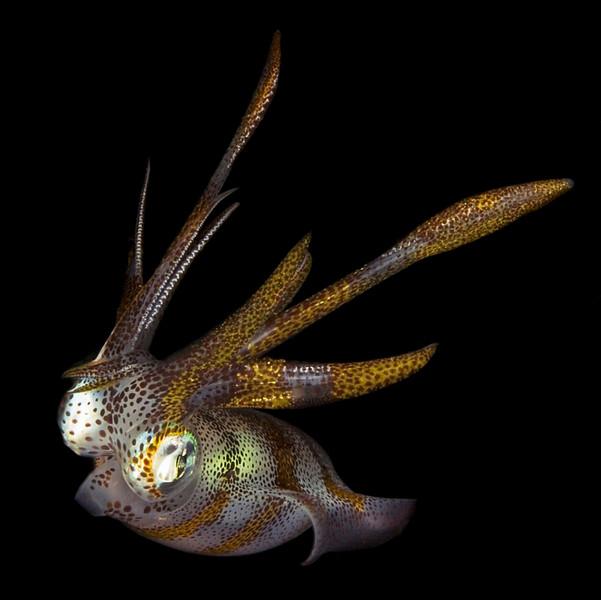 squid 5.jpg