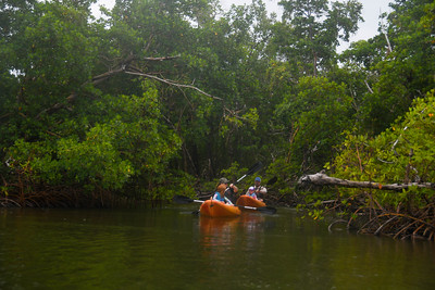 9AM Mangrove Tunnel Kayak Tour - Fronczak