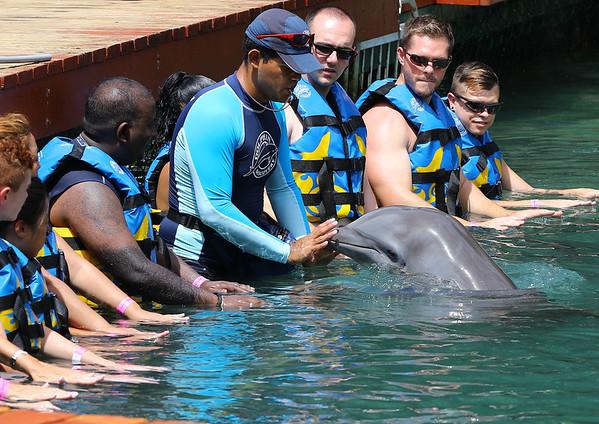 Dolphin Discovery at Tortola Island, BVI