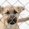 Dogs - Saturday, Feb. 7, 2015 - Frame: 3685