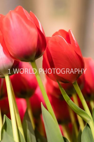 Navy Pier Chicago Flower and Garden Show-266-2-61.jpg