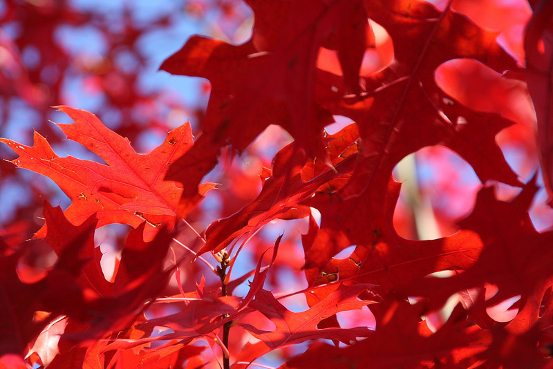 Autumn is here 2008 13.JPG