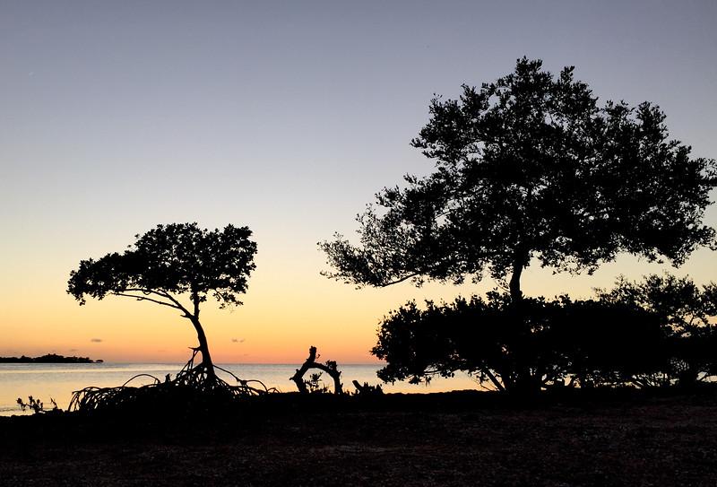 grassy key mangrove-1.jpg