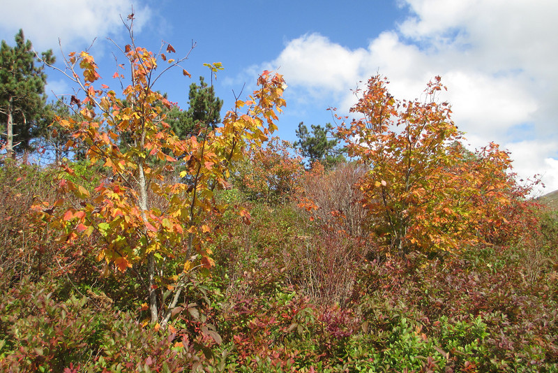 Art Loeb Trail -- 5,800'