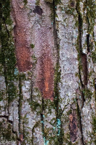 bark 021613-5.jpg