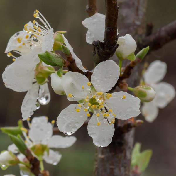 austin-spring-2018-03-04-2018-20.jpg