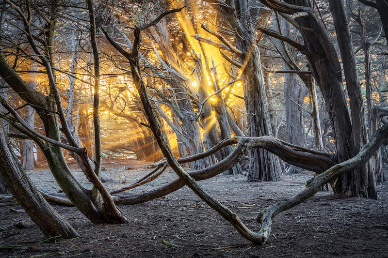 Gleaming Light, Study 2, Sea Ranch, CA