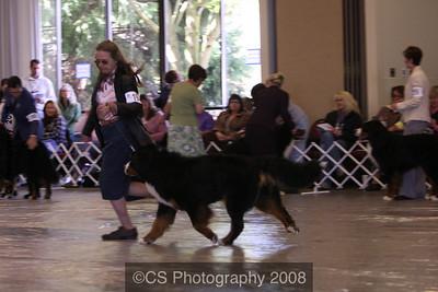 Open Dog-BMDCA 2009