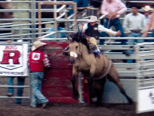 rodeo horse bucking out of the gate.jpg