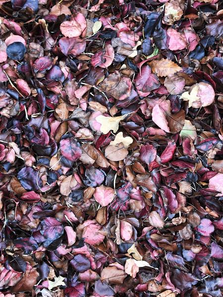 2017-11-17 Leaves 2916.jpg