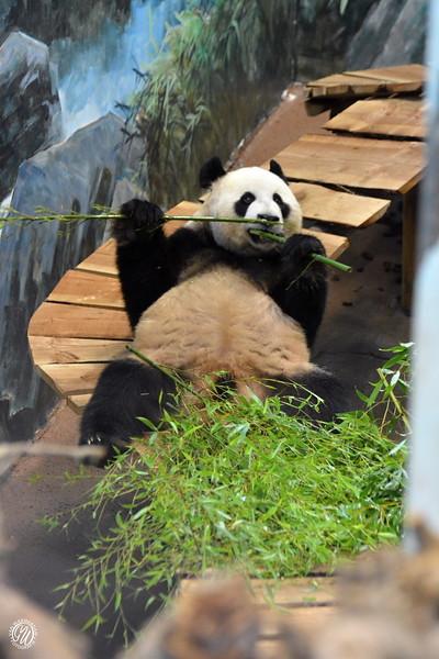 20180909 Ouwehands dierenpark GVW_8626.jpg