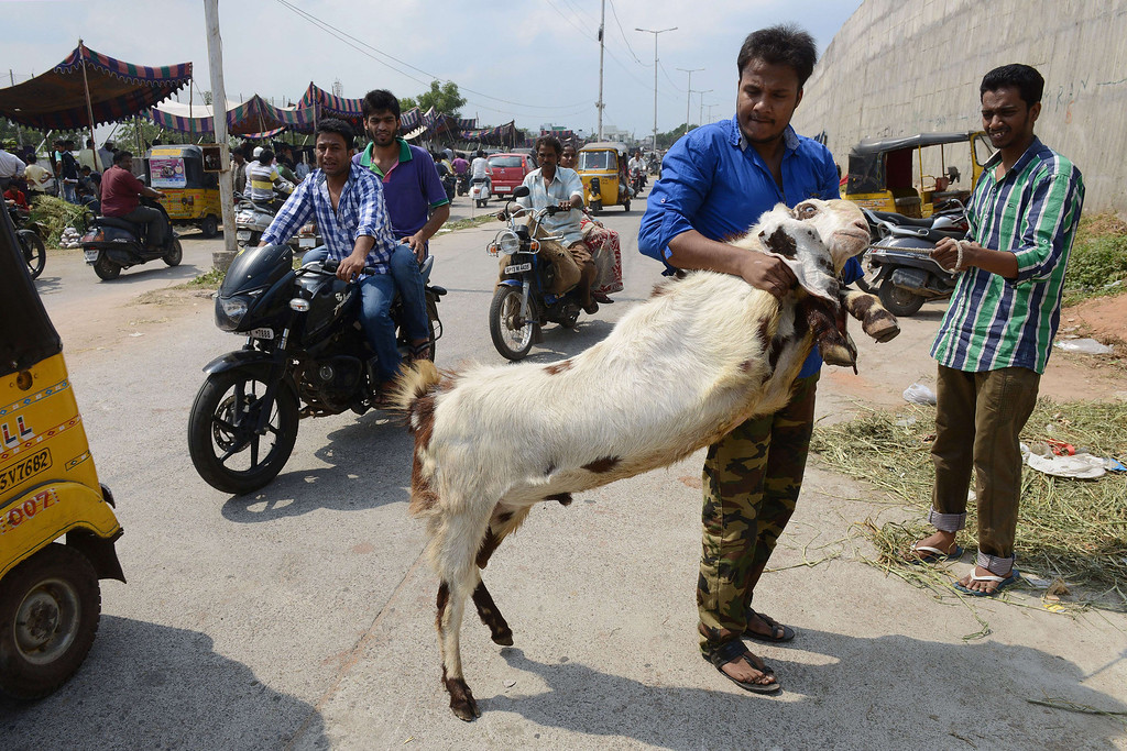 . An Indian vendor struggles with an errant goat at a livestock market in Hyderabad on October 15, 2013, ahead of the Muslim feast of Eid al-Adha.AFP PHOTO / Noah SEELAM/AFP/Getty Images
