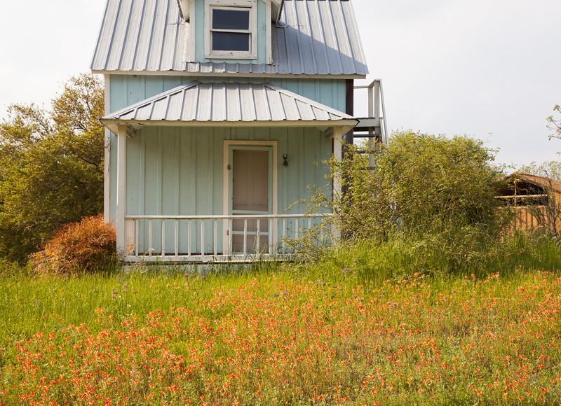 2015_4_3 Texas Wildflowers-7996.jpg