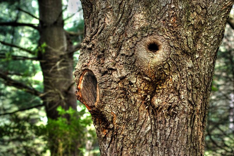 Tree-eye-hdr.jpg