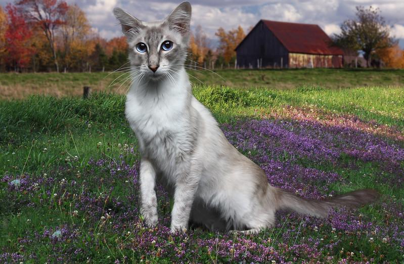Saule-cat-33.jpg