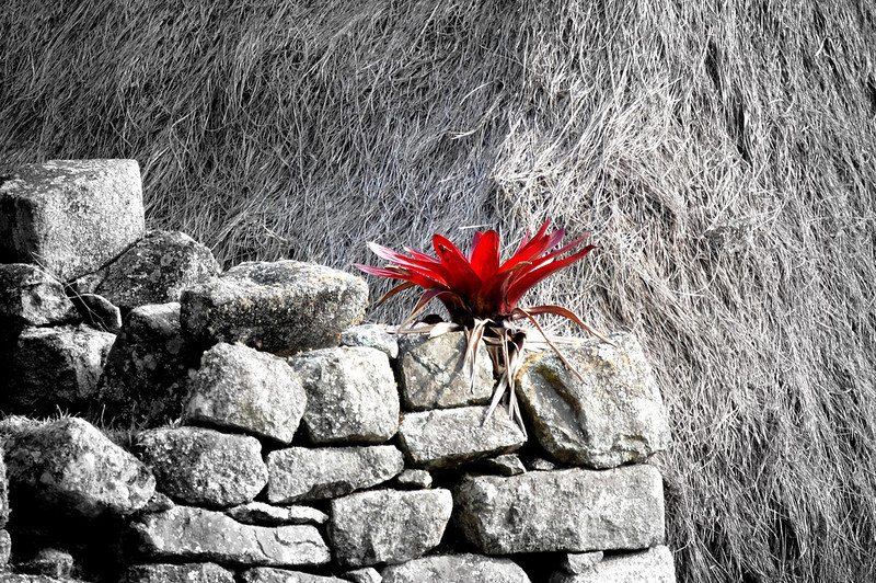lonely flower.jpg