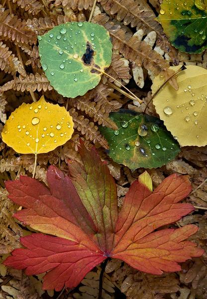 Macro - Leaves