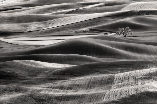 b/w, hills, Palouse
