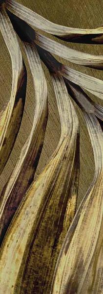 2019 DRIED palm leaf master P003.jpg
