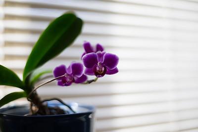 Orchids 2-28-16