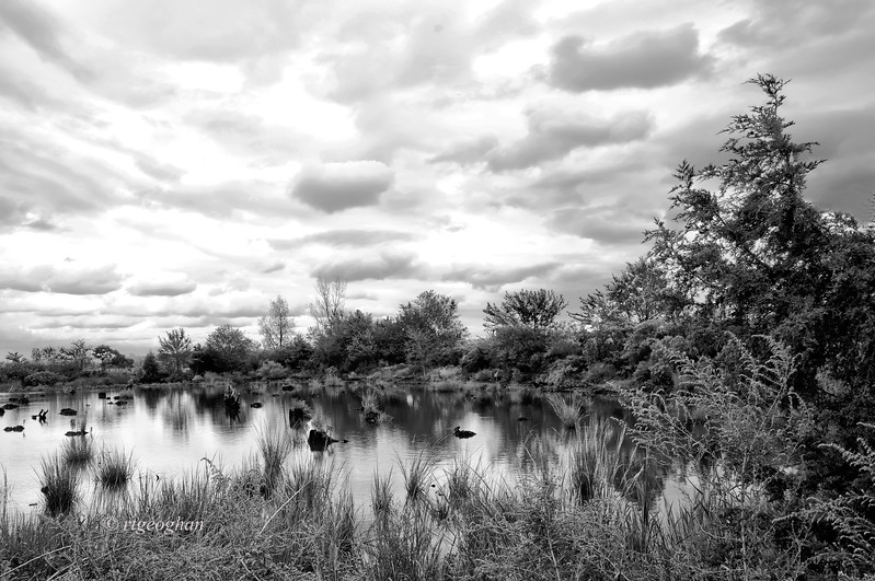 Sept 20_Mill Creek Marsh BW_0405.jpg