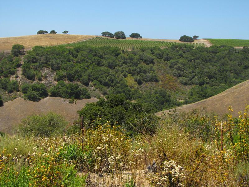 South ridge, Carmel Valley